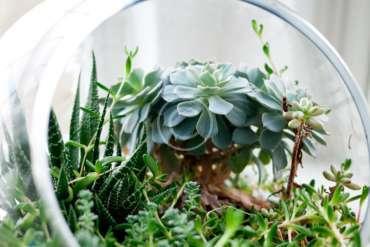 Terrarium Planter Table Runner