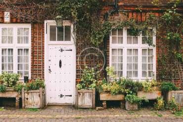 10 Popular Christmas Houseplants